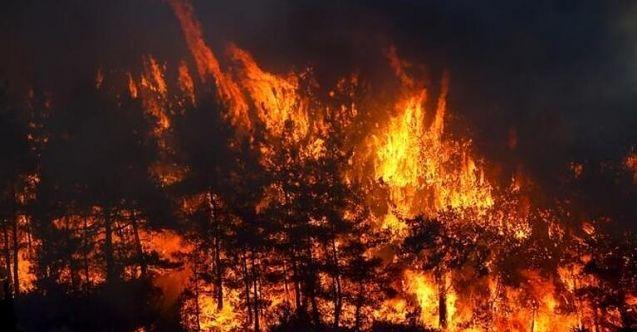 """""""Yangın bölgesinde yaraların hızla sarılması için aralıksız çalışıyoruz"""""""