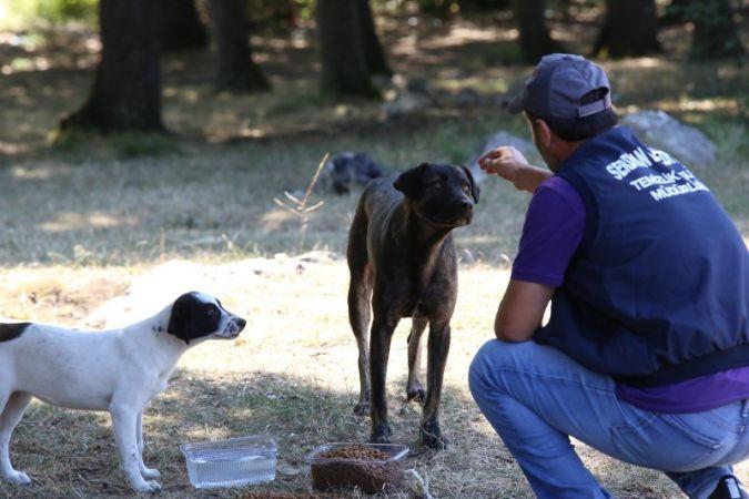Serdivan Belediyesi sokak hayvanları için seferber oldu