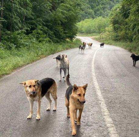 O Köyde Başıboş Köpek Sıkıntısı Büyüyor