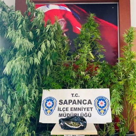 Sapanca'da kenevir baskını: 3 gözaltı