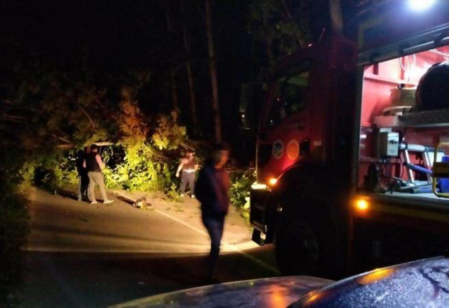 Ağaçlar karayoluna devrildi yol trafiğe kapandı