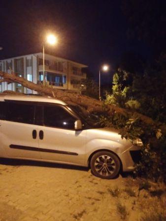Kurumuş ağaç, park halindeki aracın üzerine devrildi