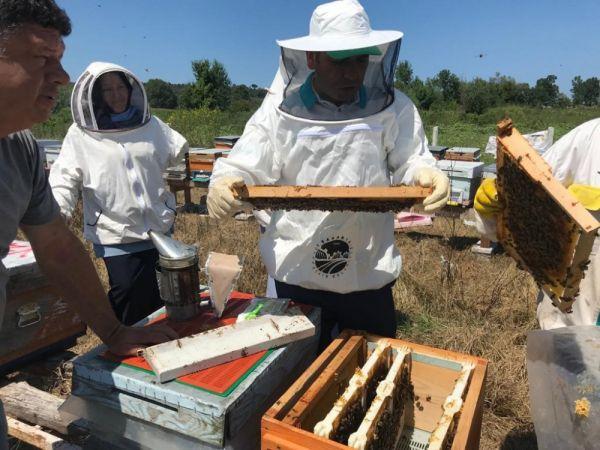 Büyükşehir, ana arı üretimi eğitimleri gerçekleştirildi