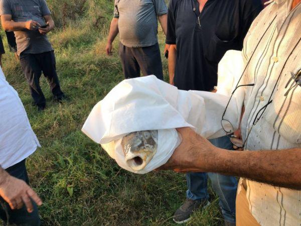 Acarlar Longozunu besleyen derelerde balık ölümlerine bölge halkından tepki