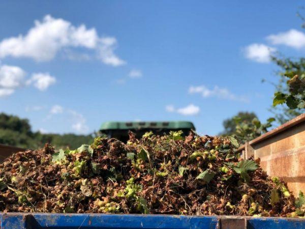O ilçede fındık hasadında yüzde 20 düşüş yaşandı