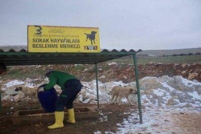 Gaziantep'te Sokak Hayvanları İçin Beslenme Noktaları Yapıldı